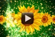 Free Wedding Motion Background Loop 1080p Full HD