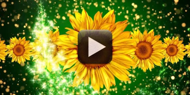 Free Wedding Motion Background Loop 1080p Full HD | All Design ...