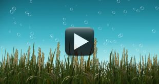 Free Nature BackGround Video with Cool Bubbles Animation