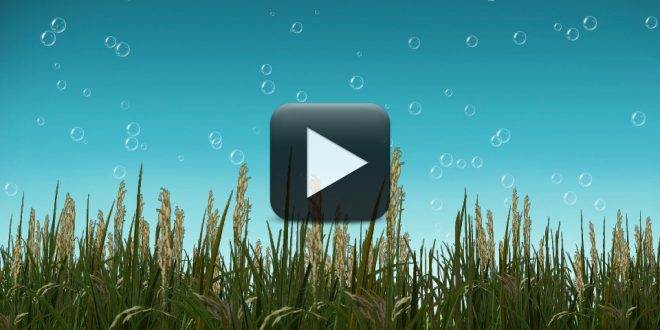 Free Template Adobe After Effect Outro Template Sony Vegas