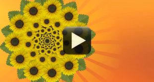 HD Flowers Animated Background Free Download