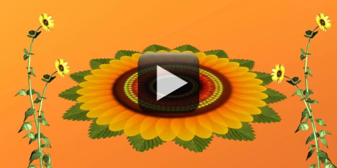 Flowers Animation Video Free Download | All Design Creative