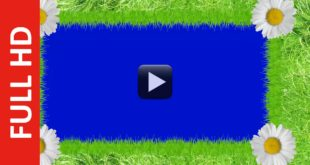 Grass Frame Animated Background