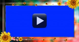 Wedding Background Frame Video Free Download in HD