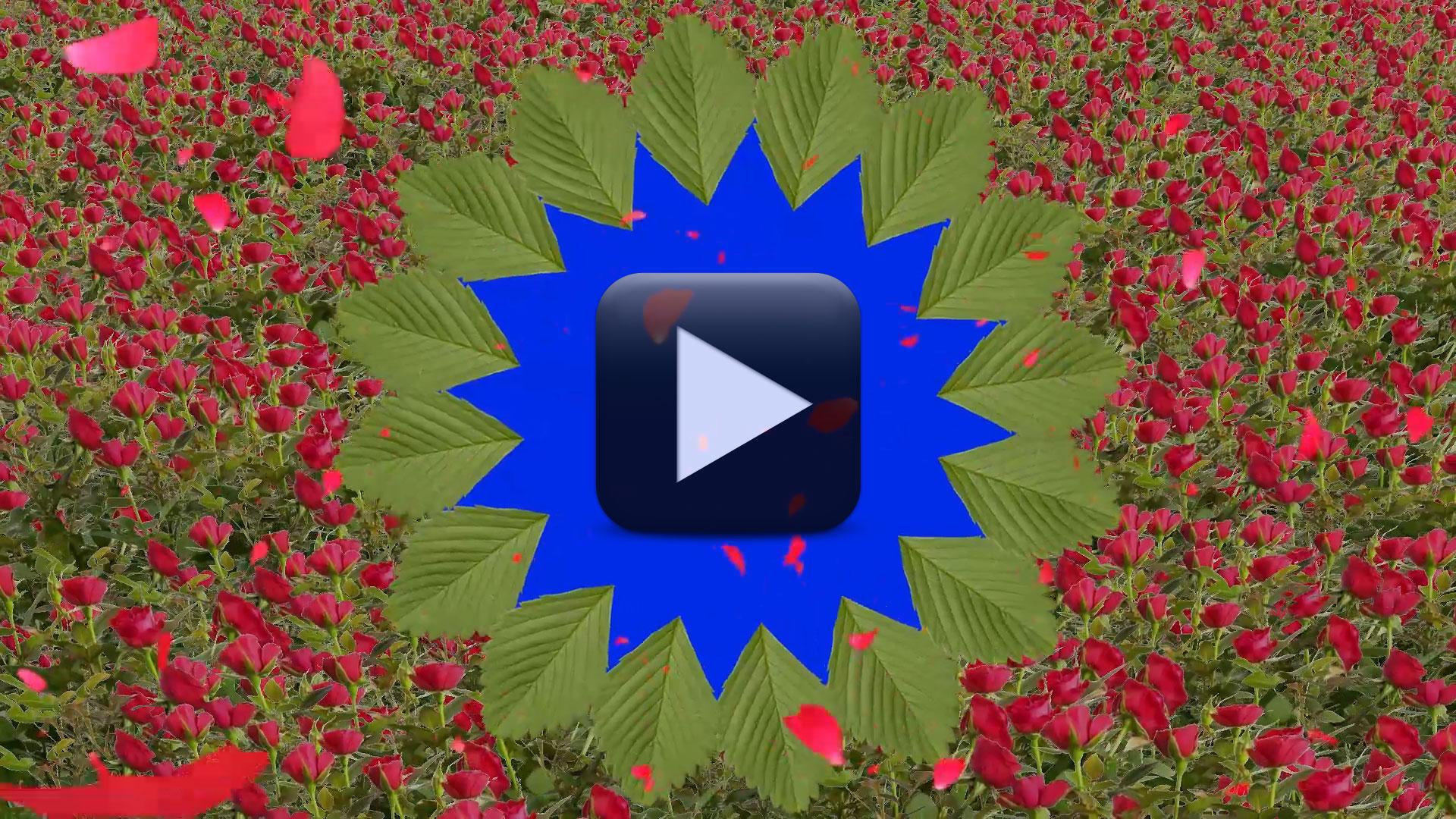 Best Wedding Background Video Effect
