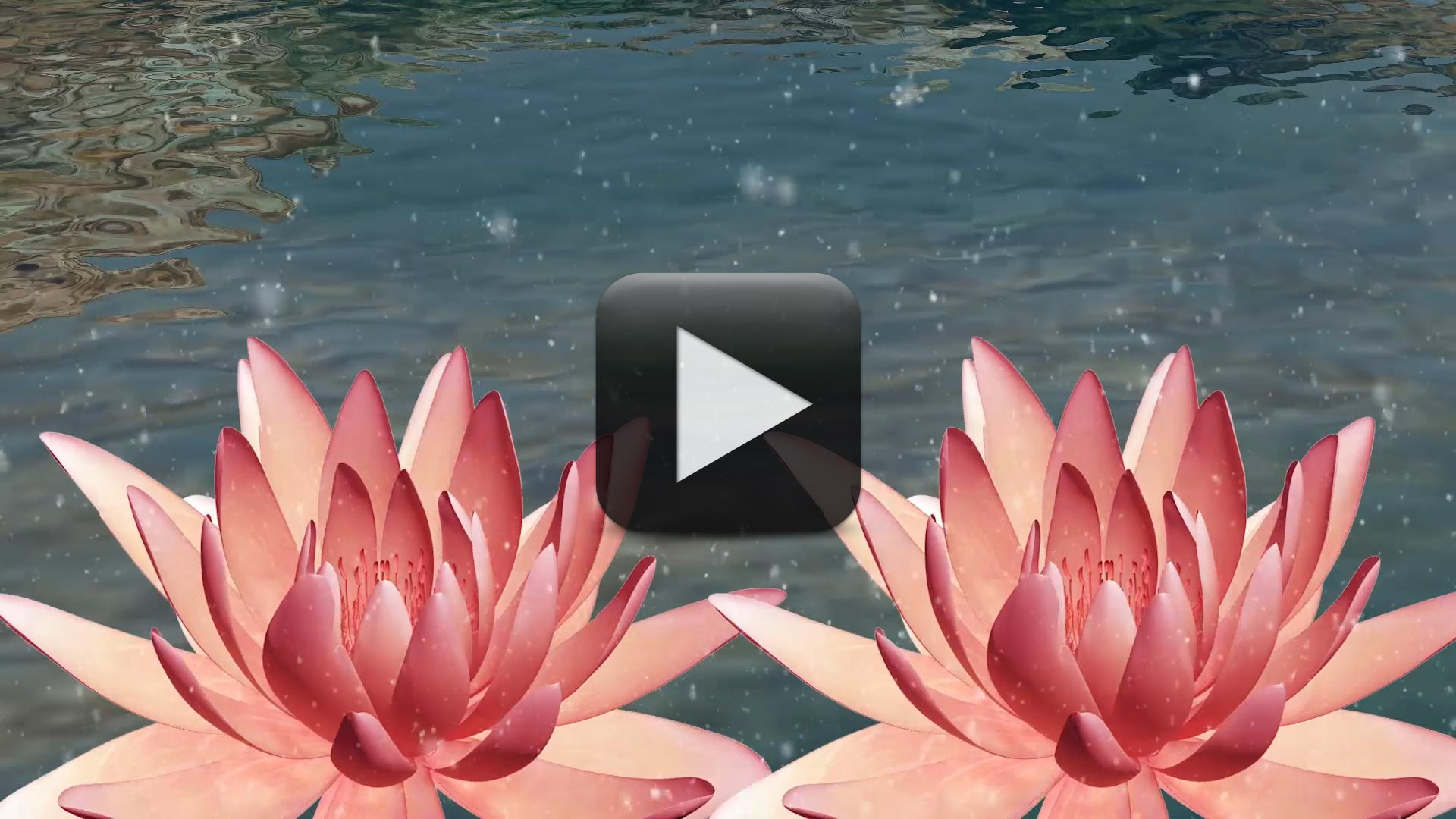 Best Wedding Title Background Video HD-Water Lily Animation