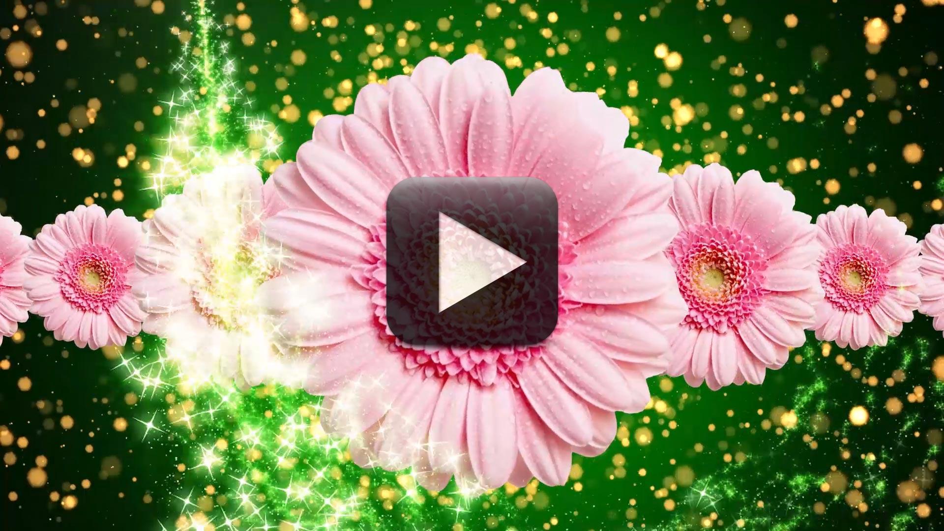 Best Wedding Title Background Video