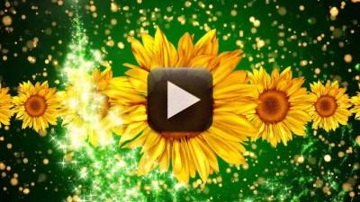 Free Wedding Motion Background Loop 1080p Full Hd All