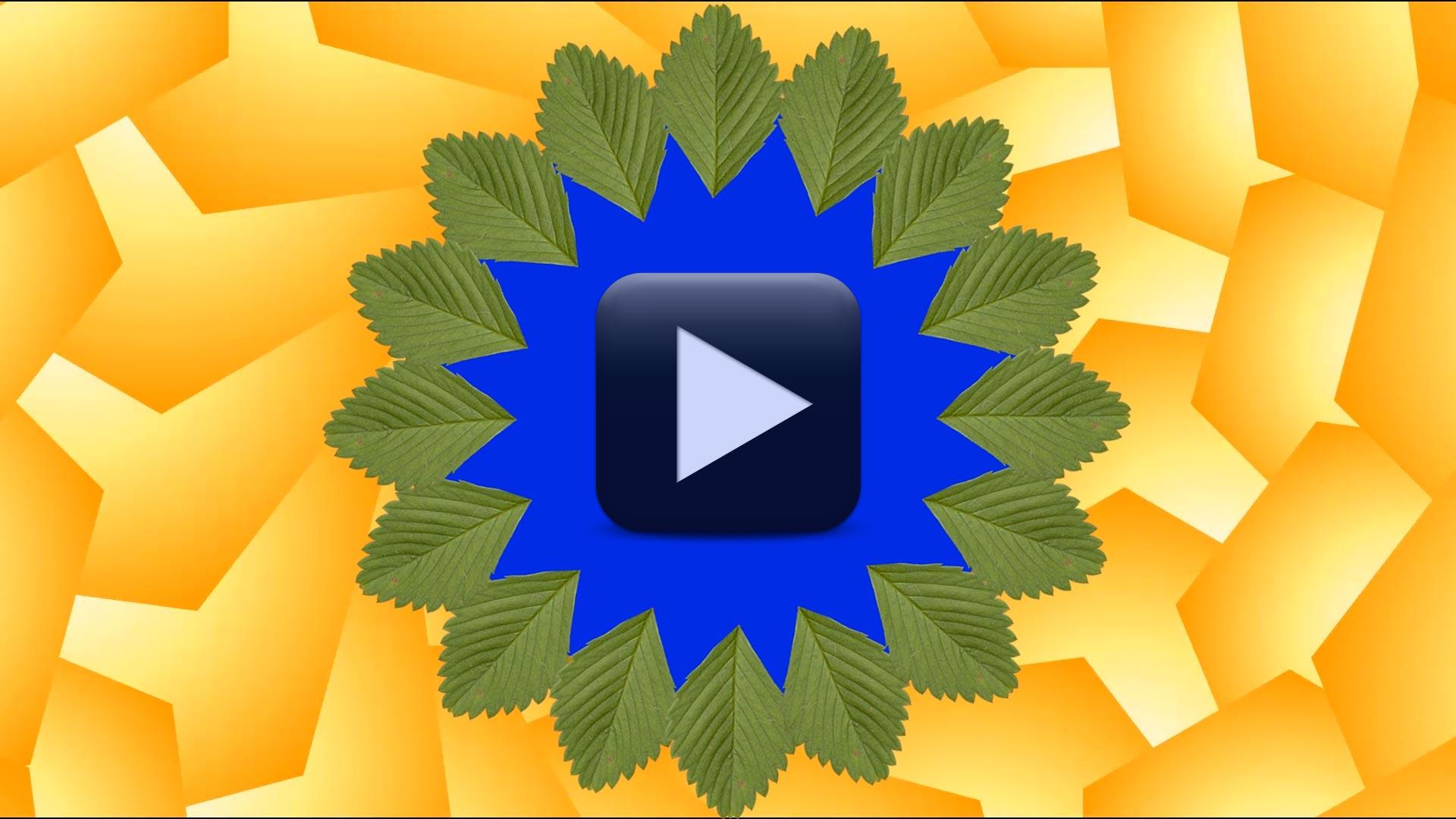 Leaf Wedding Background Video Frame