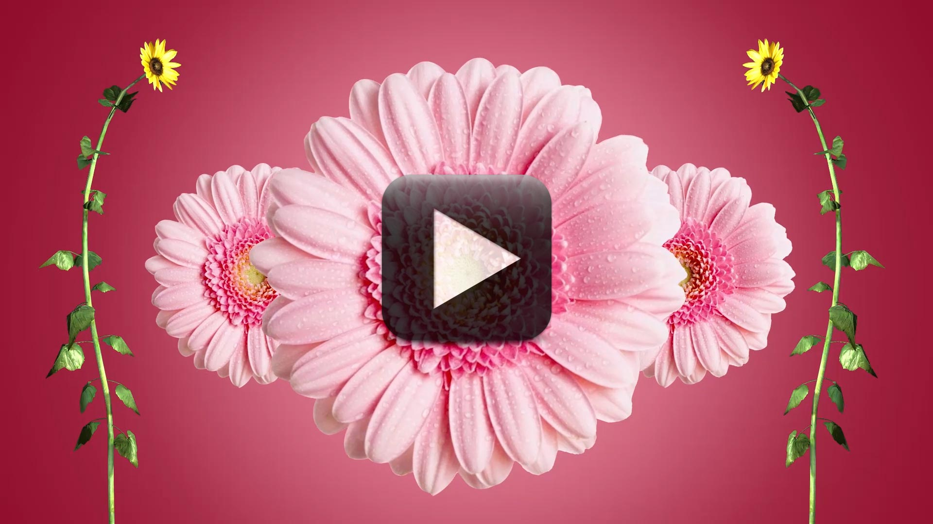 Wedding Intro Video Effects-Cool Flower Motion Graphics