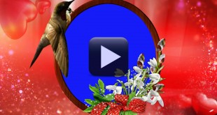 wedding background video effects hd