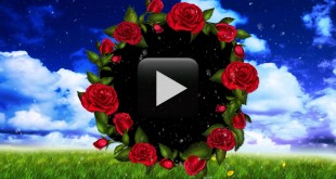 Wedding Motion Video Frame Effects HD