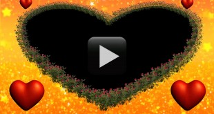 Lovely Roses Blooming Animation-Wedding Video Frame