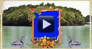 Video Frame Wedding Backgrounds