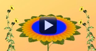 HD 1080p-Wedding Flower Animation Background video