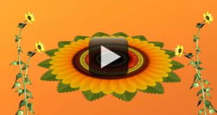 Flowers Animation Video Free Download