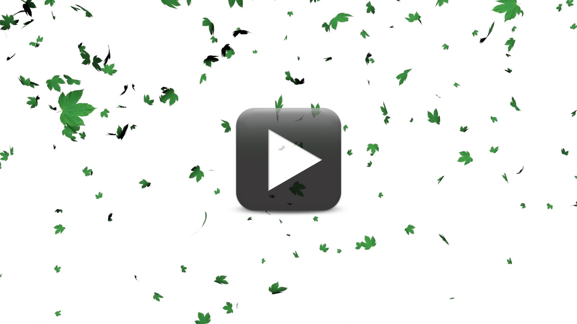 Best Leaves Falling Animation-White Screen Background Effect