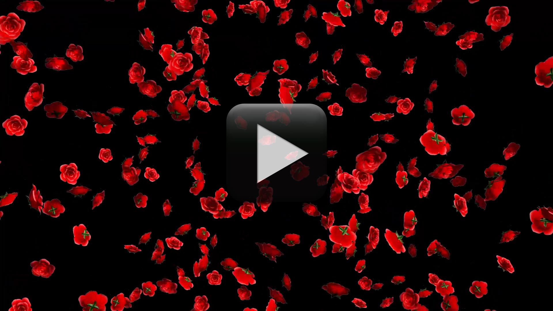 Falling Rose Flowers Animation in Black Screen Background