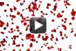 Free Rose Flowers Falling Animation Video Background