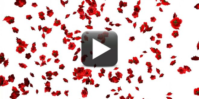 Free Rose Flowers Falling Animation Video Background All
