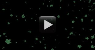Tree Falling Leaves Animation- Free Download