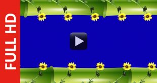 Bamboo & Sunflowers Frame Background Video
