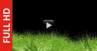 Animated Grass Motion Black Screen Background