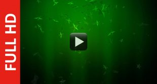 Green Background Video Effect