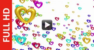 Love Heart Color Change Animation White Background