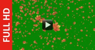 Autumn Leaves Falling Green Screen | Royalty Free