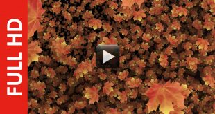 Autumn Leaves Video Background