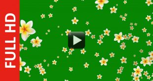 Flower Green Background Video Effects HD