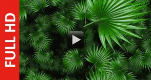 Green Fan Palm Tree Leaf Moving Animation Background