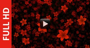 New Video Effect Falling Flowers Animation Free Download