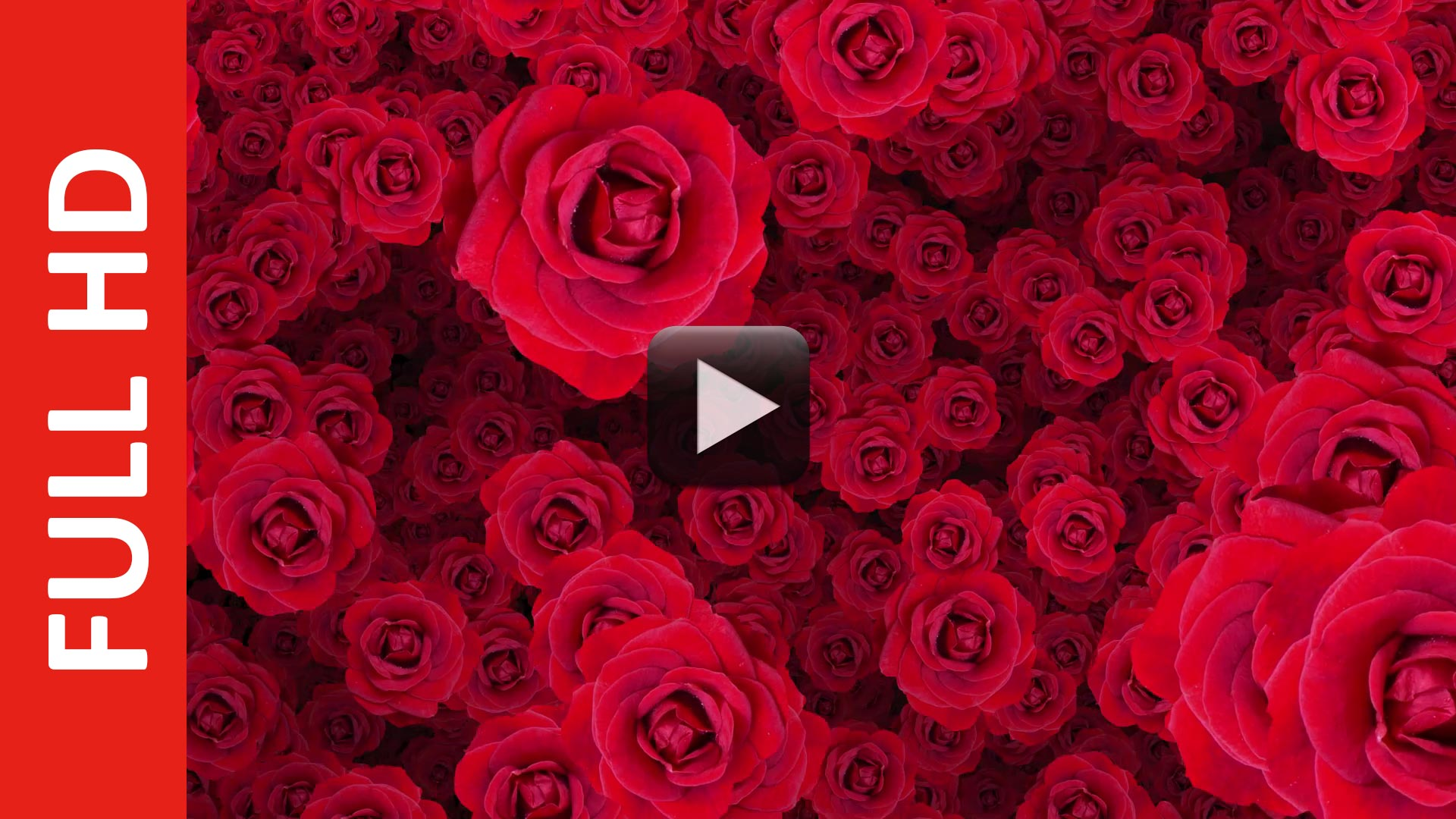 Royalty free background flower animation after effects all design royalty free background flower animation after effects all design creative izmirmasajfo Image collections