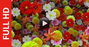 Mix Flowers Youtube Video