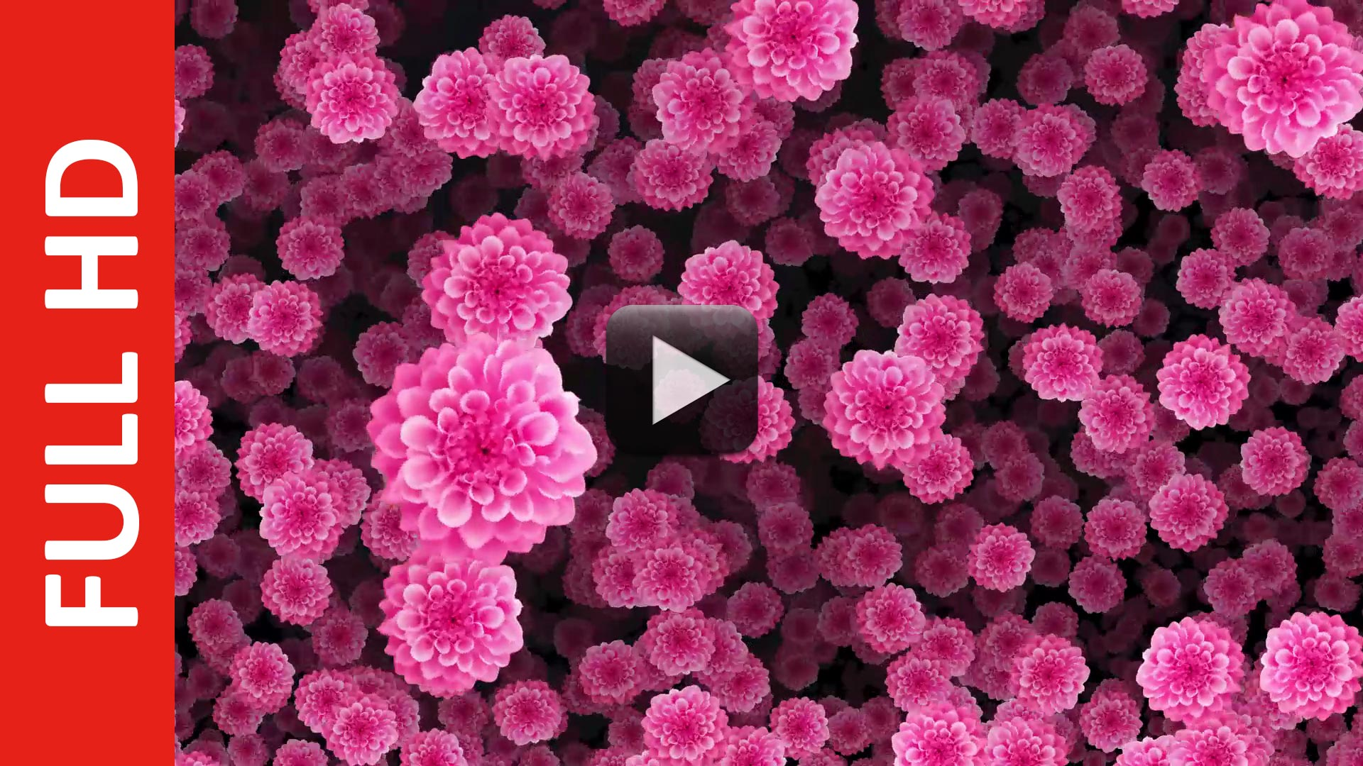 Rose Pink Flowers Animation Falling