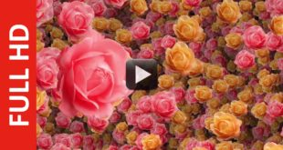 Flowers Intro Title Background Video HD