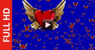 2000 LoveBird Blue Screen Background Video Effect