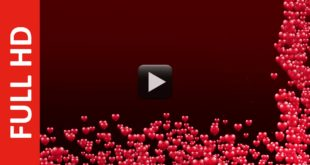 Wedding Reception Title Video Background