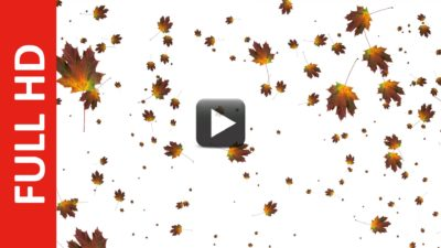 Autumn Leaves Falling Animation White Blue Green Screen Effect All Design Creative