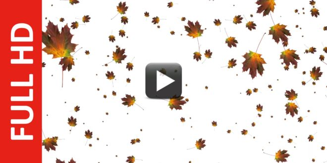 Autumn Leaves Falling Animation White, Blue & Green Screen Effect