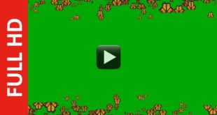 Butterflies Frame Green Screen Background Effect Video