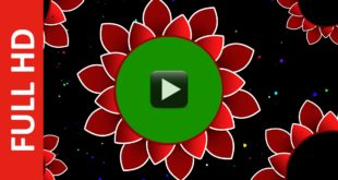 Vector Flower Wedding Background Frame Green Screen